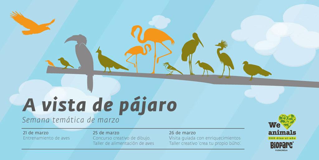 Semana temática de marzo 'a vista de pájaro'