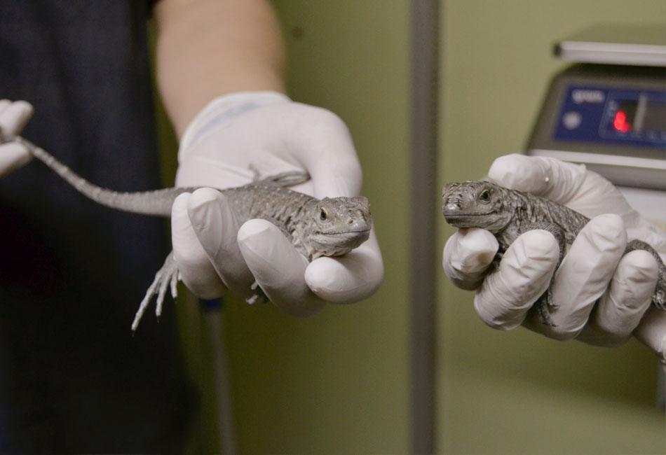 Entre reptiles
