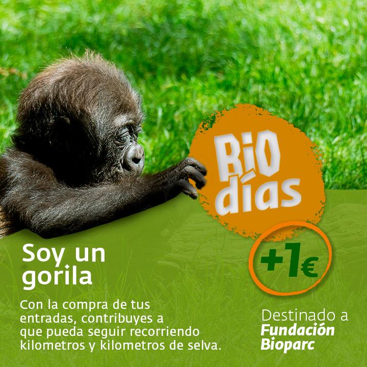 PROGRAMAS-GRAFICAS-gorila