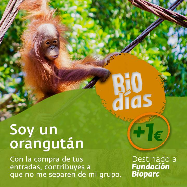 PROGRAMAS-GRAFICAS-orangutan